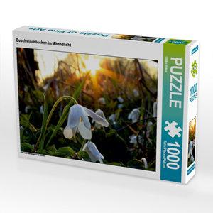 Buschwindröschen im Abendlicht 1000 Teile Puzzle quer