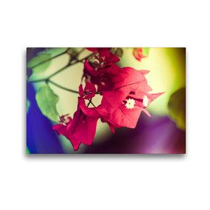 Premium Textil-Leinwand 45 cm x 30 cm quer Bougainvillea Blüten,