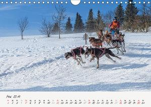 Schlittenhundesport (Wandkalender 2019 DIN A4 quer)