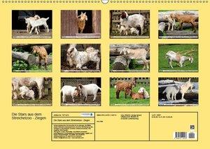 Ziegen - Die Stars aus dem Streichelzoo (Wandkalender 2019 DIN A