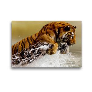 Premium Textil-Leinwand 45 cm x 30 cm quer Tiger lieben das Wass