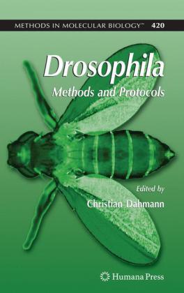 Drosophila - zum Schließen ins Bild klicken