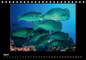 OCEAN - ART (Tischkalender immerwährend DIN A5 quer)