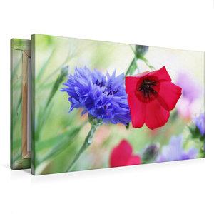 Premium Textil-Leinwand 75 cm x 50 cm quer Kornblume und Roter L