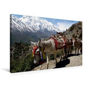 Premium Textil-Leinwand 75 cm x 50 cm quer Pferde sind noch imme