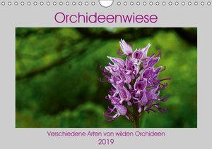 Orchideenwiese 2019 (Wandkalender 2019 DIN A4 quer)