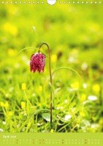 Farbenreicher Blütenzauber (Wandkalender 2020 DIN A4 hoch)