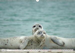 Guck mal ... Robben im Wattenmeer