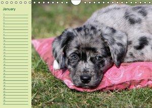 Puppies Birthday Calendar / UK-Version (Wall Calendar perpetual