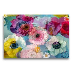 Premium Textil-Leinwand 75 cm x 50 cm quer Anemonen in Wasser
