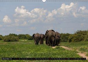 Elefanten - Faszination der Wildnis