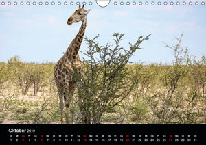 Tierreich Namibia (Wandkalender 2019 DIN A4 quer)
