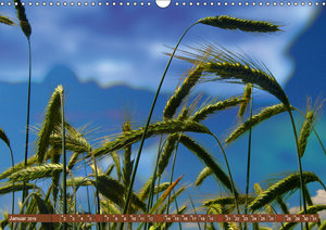 Agrarwirtschaft - Impressionen (Wandkalender 2019 DIN A3 quer)