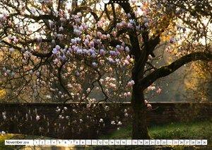 Zauberhafte Magnolien (Wandkalender 2018 DIN A2 quer)