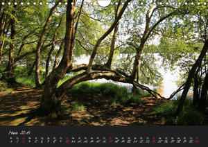 Broc?liande / Zauberwald der Bretagne (Wandkalender 2019 DIN A4