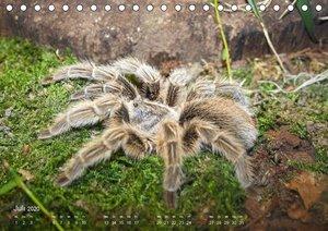 Vogelspinnen (Theraphosidae)CH-Version