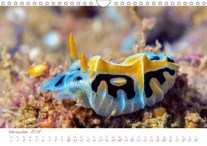 Nacktschnecken, Farbspektakel unter Wasser