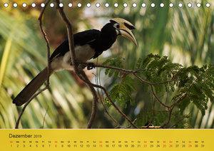 Orienthornvögel (Tischkalender 2019 DIN A5 quer)