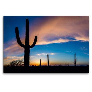 Premium Textil-Leinwand 120 cm x 80 cm quer Saguaro Nationalpark