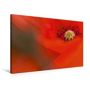 Premium Textil-Leinwand 90 cm x 60 cm quer Roter Mohn