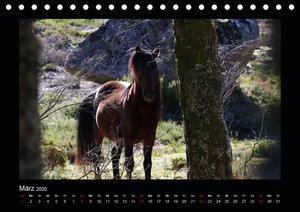 Garranos - Bedrohte Wildpferde Europas