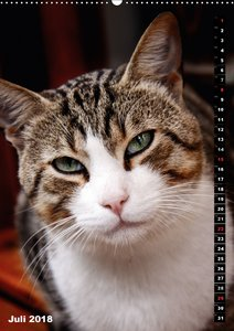 Istanbuls Katzen