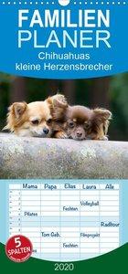 Chihuahuas - kleine Herzensbrecher - Familienplaner hoch