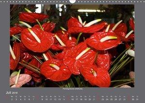 Madeiras Blumenwelt