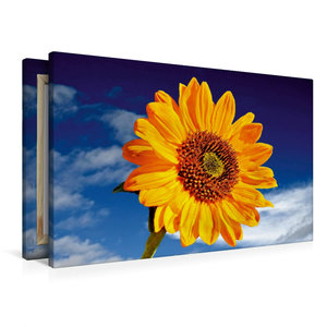 Premium Textil-Leinwand 90 cm x 60 cm quer Sonnenblume Sonja-Hel