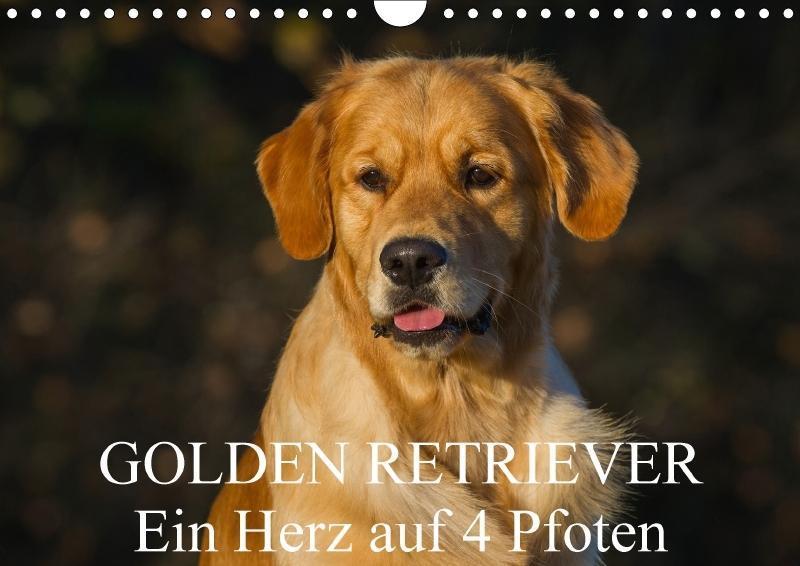 Golden Retriever - Ein Herz auf 4 Pfoten - zum Schließen ins Bild klicken