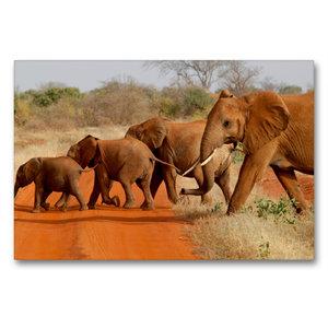 Premium Textil-Leinwand 90 cm x 60 cm quer Tsavo East NP, Kenia