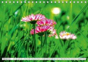 Farbtupfer der Natur ? Blütenpracht