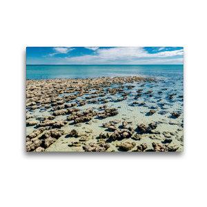 Premium Textil-Leinwand 45 cm x 30 cm quer Stromatolithen