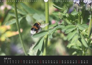 Hummelflug (Wandkalender 2019 DIN A3 quer)