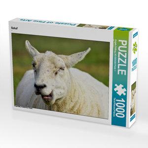 Schaf 1000 Teile Puzzle quer