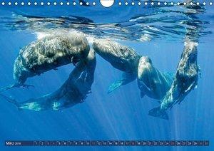 Wale: Aus den blauen Tiefen der Ozeane