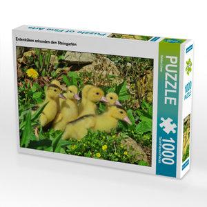 CALVENDO Puzzle Entenküken erkunden den Steingarten 1000 Teile L