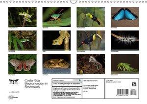 Costa Rica Begegnungen im Regenwald