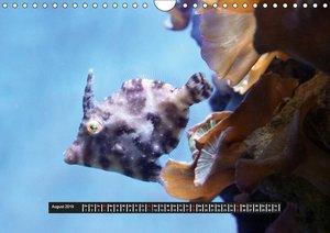 Abgetaucht - Leben unter Wasser (Wandkalender 2019 DIN A4 quer)