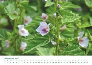 Arzneipflanzen (Wandkalender 2019 DIN A2 quer)