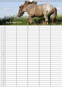 Der Kaltblut-Familienplaner (Wandkalender 2019 DIN A3 hoch)