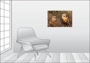 Premium Textil-Leinwand 75 cm x 50 cm quer Schleiereule