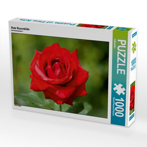 Rote Rosenblüte 1000 Teile Puzzle quer