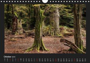 Märchenhafter Reinhardswald und Urwald Sababurg (Wandkalender 20