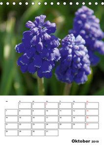 Frühlingserwachen (Tischkalender 2019 DIN A5 hoch)