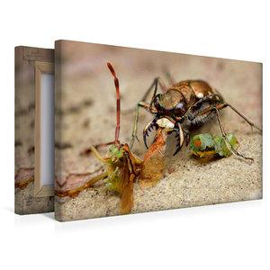 Premium Textil-Leinwand 45 cm x 30 cm quer Ein Feld-Sandlaufkäfe
