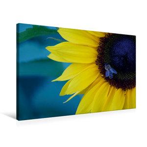 Premium Textil-Leinwand 75 cm x 50 cm quer Honigbiene auf Sonnen