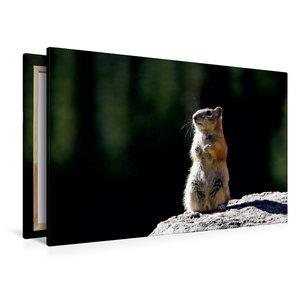 Premium Textil-Leinwand 120 cm x 80 cm quer Chipmunk