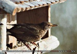 NATUR PUR Vertraute Singvögel (Wandkalender 2019 DIN A3 quer)
