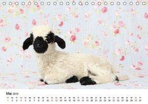 Walliser Schwarznasenschaf Valais Blacknose Sheep (Tischkalender